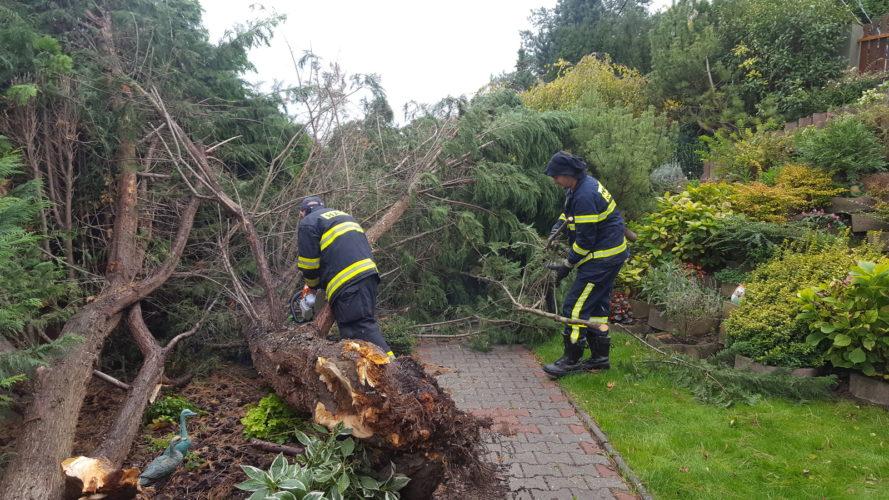 Technický zásah – spadnutý strom